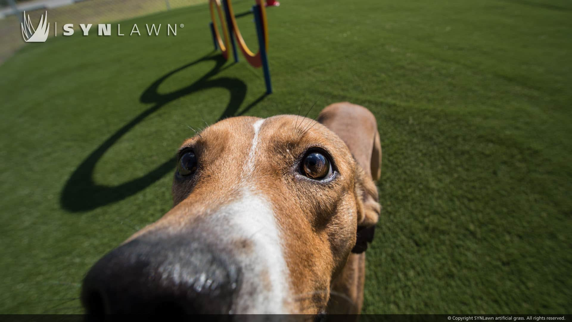 dog standing on a pet turf installation