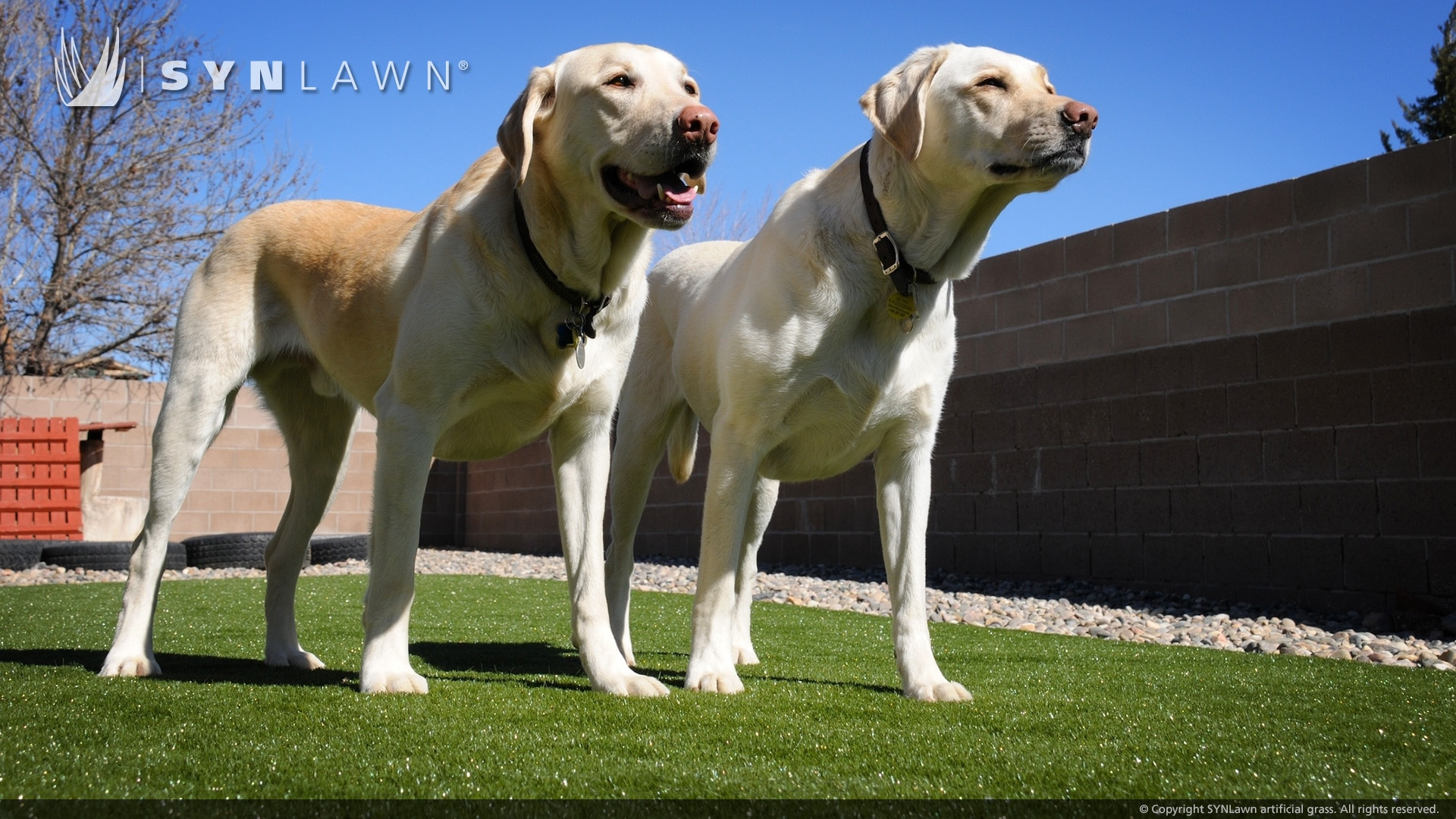 two dogs standing on artificial pet turf